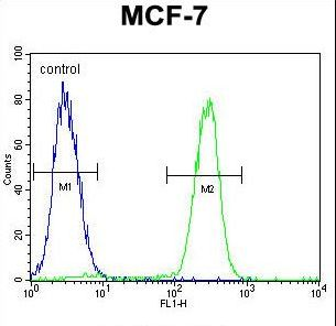 RACGAP1 / MGCRACGAP Antibody - RACGAP1 Antibody flow cytometry of MCF-7 cells (right histogram) compared to a negative control cell (left histogram). FITC-conjugated goat-anti-rabbit secondary antibodies were used for the analysis.