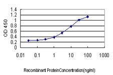 RAD23A / HHR23A Antibody - Detection limit for recombinant GST tagged RAD23A is approximately 0.03 ng/ml as a capture antibody.