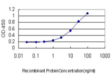 Detection limit for recombinant GST tagged RALB is approximately 0.3 ng/ml as a capture antibody.