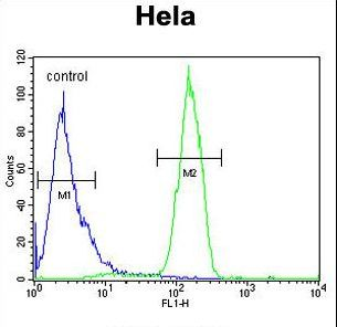 RAMA1 / SKA3 Antibody - C13orf3 Antibody flow cytometry of HeLa cells (right histogram) compared to a negative control cell (left histogram). FITC-conjugated goat-anti-rabbit secondary antibodies were used for the analysis.