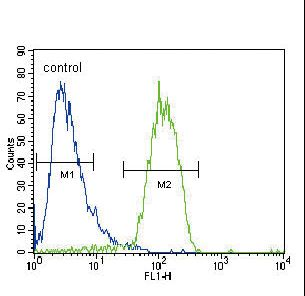 RASGRP1 / RASGRP Antibody - RASGRP1 Antibody flow cytometry of HepG2 cells (right histogram) compared to a negative control cell (left histogram). FITC-conjugated goat-anti-rabbit secondary antibodies were used for the analysis.