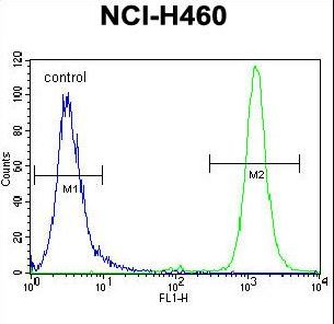 RASSF8 antibody flow cytometry of NCI-H460 cells (right histogram) compared to a negative control cell (left histogram). FITC-conjugated goat-anti-rabbit secondary antibodies were used for the analysis.