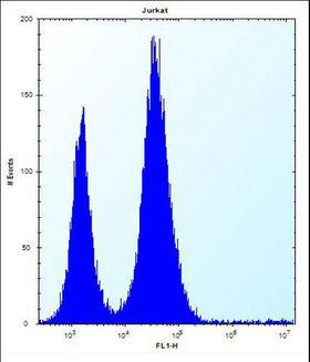 RBL2 / RB2 p130 Antibody - RBL2 Antibody flow cytometry of Jurkat cells (right histogram) compared to a negative control cell (left histogram). FITC-conjugated donkey-anti-rabbit secondary antibodies were used for the analysis.