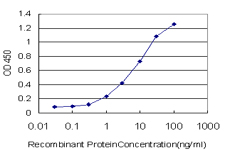 RBMXL2 Antibody - Detection limit for recombinant GST tagged HNRNPG-T is approximately 0.1 ng/ml as a capture antibody.