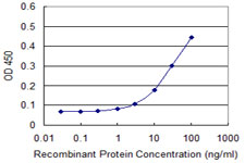 RCN1 / Reticulocalbin 1 Antibody - Detection limit for recombinant GST tagged RCN1 is approximately 1 ng/ml as a capture antibody.