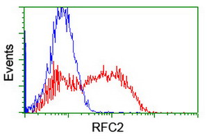 HEK293T cells transfected with either overexpress plasmid (Red) or empty vector control plasmid (Blue) were immunostained by anti-RFC2 antibody, and then analyzed by flow cytometry.