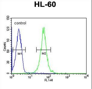 RGR Antibody flow cytometry of HL-60 cells (right histogram) compared to a negative control cell (left histogram). FITC-conjugated goat-anti-rabbit secondary antibodies were used for the analysis.