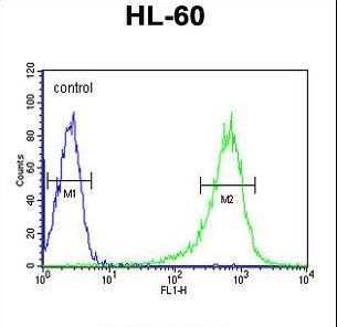 RGS1 Antibody - RGS1 Antibody flow cytometry of HL-60 cells (right histogram) compared to a negative control cell (left histogram). FITC-conjugated goat-anti-rabbit secondary antibodies were used for the analysis.