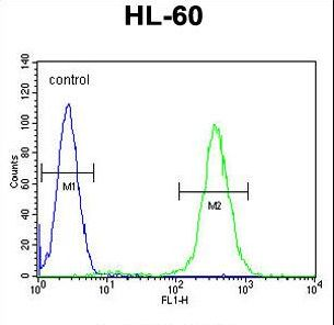 RINL Antibody - RINL Antibody flow cytometry of HL-60 cells (right histogram) compared to a negative control cell (left histogram). FITC-conjugated goat-anti-rabbit secondary antibodies were used for the analysis.