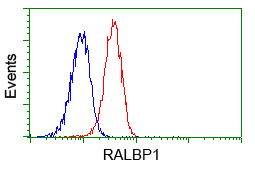 Flow cytometry of Jurkat cells, using anti-RALBP1 antibody, (Red) compared to a nonspecific negative control antibody (Blue).