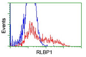 HEK293T cells transfected with either overexpress plasmid (Red) or empty vector control plasmid (Blue) were immunostained by anti-RLBP1 antibody, and then analyzed by flow cytometry.