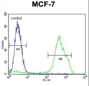 RNF19B Antibody - RNF19B Antibody flow cytometry of MCF-7 cells (right histogram) compared to a negative control cell (left histogram). FITC-conjugated goat-anti-rabbit secondary antibodies were used for the analysis.