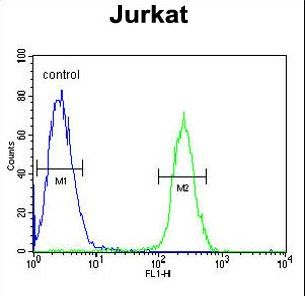 RNF8 Antibody - RNF8 Antibody flow cytometry of Jurkat cells (right histogram) compared to a negative control cell (left histogram). FITC-conjugated goat-anti-rabbit secondary antibodies were used for the analysis.