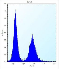 RPL11 Antibody flow cytometry of Jurkat cells (right histogram) compared to a negative control cell (left histogram). FITC-conjugated donkey-anti-rabbit secondary antibodies were used for the analysis.