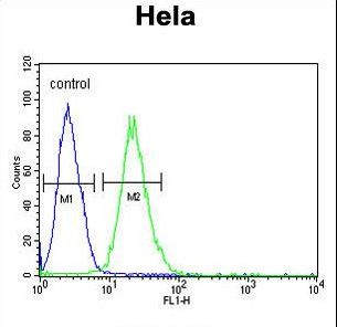 RPL31 / Ribosomal Protein L31 Antibody - RPL31 Antibody flow cytometry of HeLa cells (right histogram) compared to a negative control cell (left histogram). FITC-conjugated goat-anti-rabbit secondary antibodies were used for the analysis.