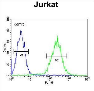 RPRD1B Antibody - RPR1B Antibody flow cytometry of Jurkat cells (right histogram) compared to a negative control cell (left histogram). FITC-conjugated goat-anti-rabbit secondary antibodies were used for the analysis.