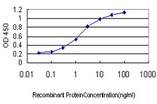 RRP9 Antibody - Detection limit for recombinant GST tagged RNU3IP2 is approximately 0.1 ng/ml as a capture antibody.