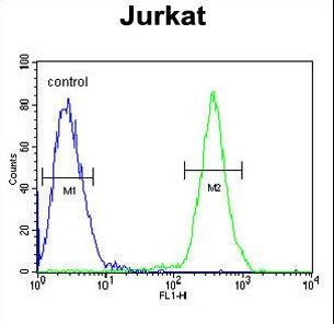 SAMSN1 Antibody - SAMSN1 Antibody flow cytometry of Jurkat cells (right histogram) compared to a negative control cell (left histogram). FITC-conjugated goat-anti-rabbit secondary antibodies were used for the analysis.