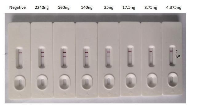 SARS-CoV-2 Nucleoprotein Antibody - In the Colloidal Gold Immunochromatography Assay detection system, the background of antibody is clean, the detection limit can be as low as 8.75ng, and the specificity is very good.