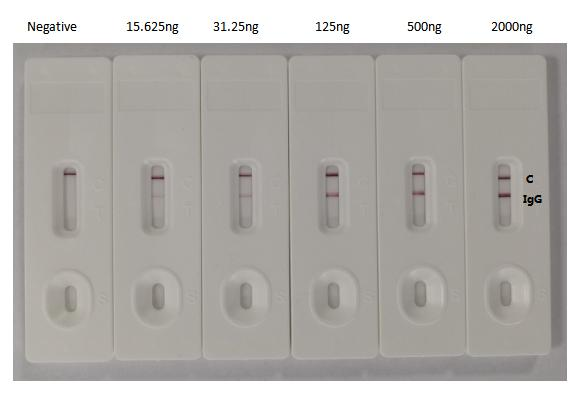 SARS-CoV-2 Spike Glycoprotein Antibody - In the Colloidal Gold Immunochromatography Assay detection system, the background of antibody is clean, the detection limit can be as low as 15.625ng, and the specificity is very good.