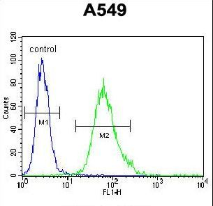 SCEL Antibody - SCEL Antibody flow cytometry of A549 cells (right histogram) compared to a negative control cell (left histogram). FITC-conjugated goat-anti-rabbit secondary antibodies were used for the analysis.