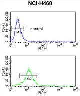 SDR / SDPR Antibody - SDR Antibody flow cytometry of NCI-H460 cells (bottom histogram) compared to a negative control cell (top histogram). FITC-conjugated goat-anti-rabbit secondary antibodies were used for the analysis.