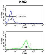 SDS Antibody flow cytometry of K562 cells (bottom histogram) compared to a negative control cell (top histogram). FITC-conjugated goat-anti-rabbit secondary antibodies were used for the analysis.
