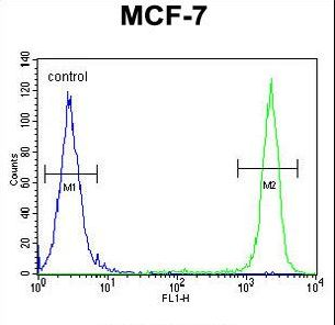 SEL1L Antibody - SEL1L Antibody flow cytometry of MCF-7 cells (right histogram) compared to a negative control cell (left histogram). FITC-conjugated goat-anti-rabbit secondary antibodies were used for the analysis.