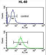 Selenium Binding Protein 1 Antibody - SELENBP1 Antibody flow cytometry of HL-60 cells (bottom histogram) compared to a negative control cell (top histogram). FITC-conjugated goat-anti-rabbit secondary antibodies were used for the analysis.
