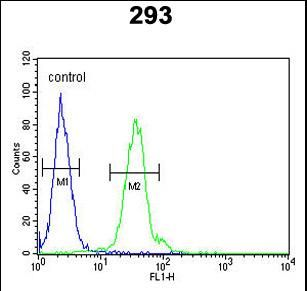 SELS Antibody - SELS Antibody (Center) flow cytometry of 293 cells (right histogram) compared to a negative control cell (left histogram).FITC-conjugated goat-anti-rabbit secondary antibodies were used for the analysis.