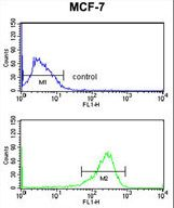 SELT / Selenoprotein T Antibody - SELT Antibody flow cytometry of MCF-7 cells (bottom histogram) compared to a negative control cell (top histogram). FITC-conjugated goat-anti-rabbit secondary antibodies were used for the analysis.