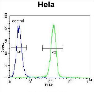 SELV Antibody - SELV Antibody flow cytometry of HeLa cells (right histogram) compared to a negative control cell (left histogram). FITC-conjugated goat-anti-rabbit secondary antibodies were used for the analysis.