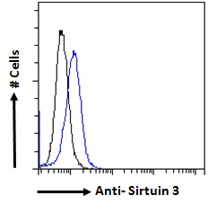 SIRT3 / Sirtuin 3 Antibody - SIRT3 / Sirtuin 3 antibody flow cytometric analysis of paraformaldehyde fixed NIH3T3 cells (blue line), permeabilized with 0.5% Triton, showing a low level of staining. Primary incubation 1hr (10ug/ml) followed by Alexa Fluor 488 secondary antibody (2ug/ml), showing vesicle staining. The nuclear stain is DAPI (blue).