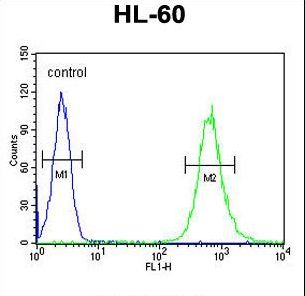 SLC35E2 Antibody - S35E2 Antibody flow cytometry of HL-60 cells (right histogram) compared to a negative control cell (left histogram). FITC-conjugated goat-anti-rabbit secondary antibodies were used for the analysis.