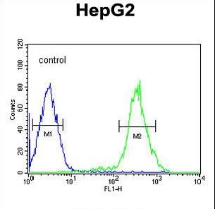 YLAT2 Antibody flow cytometry of HepG2 cells (right histogram) compared to a negative control cell (left histogram). FITC-conjugated goat-anti-rabbit secondary antibodies were used for the analysis.