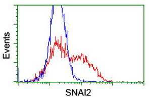 HEK293T cells transfected with either overexpress plasmid (Red) or empty vector control plasmid (Blue) were immunostained by anti-SNAI2 antibody, and then analyzed by flow cytometry.