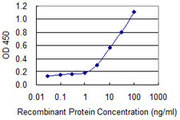Detection limit for recombinant GST tagged SNTB2 is 0.3 ng/ml as a capture antibody.