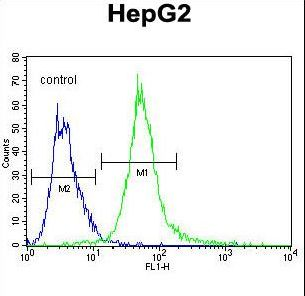 SPDYE1 Antibody flow cytometry of HepG2 cells (right histogram) compared to a negative control cell (left histogram). FITC-conjugated goat-anti-rabbit secondary antibodies were used for the analysis.
