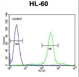 SPECC1 Antibody flow cytometry of HL-60 cells (right histogram) compared to a negative control cell (left histogram). FITC-conjugated goat-anti-rabbit secondary antibodies were used for the analysis.