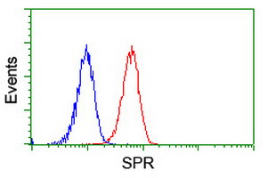 SPR Antibody - Flow cytometry of Jurkat cells, using anti-SPR antibody (Red), compared to a nonspecific negative control antibody (Blue).