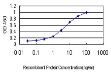 SPRY2 / Sprouty 2 Antibody - Detection limit for recombinant GST tagged SPRY2 is approximately 0.1 ng/ml as a capture antibody.