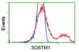 HEK293T cells transfected with either overexpress plasmid (Red) or empty vector control plasmid (Blue) were immunostained by anti-SQSTM1 antibody, and then analyzed by flow cytometry.