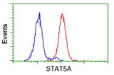 Flow cytometry of HeLa cells, using anti-STAT5A antibody (Red), compared to a nonspecific negative control antibody (Blue).