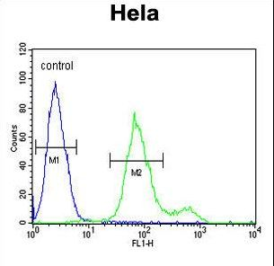 SUMF1 Antibody - SUMF1 Antibody flow cytometry of HeLa cells (right histogram) compared to a negative control cell (left histogram). FITC-conjugated goat-anti-rabbit secondary antibodies were used for the analysis.