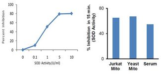 SOD Activity (% inhibition rate): human serum (10 µl) and isolated mitochondria from Jurkat cells (10 µg), and yeast (Saccromyces cerevisiae, 100 ug), was used to determine SOD Activity according to the kit protocol. Activity was measured in 15 min. at 37°C.