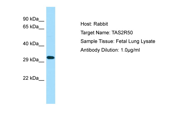 TAS2R50 Antibody -  This image was taken for the unconjugated form of this product. Other forms have not been tested.
