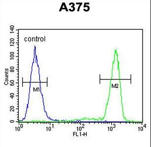 TECPR1 Antibody - PALA Antibody flow cytometry of A375 cells (right histogram) compared to a negative control cell (left histogram). FITC-conjugated goat-anti-rabbit secondary antibodies were used for the analysis.