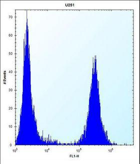 TGFBI Antibody - TGFBI Antibody flow cytometry of U251 cells (right histogram) compared to a negative control cell (left histogram). FITC-conjugated goat-anti-rabbit secondary antibodies were used for the analysis.