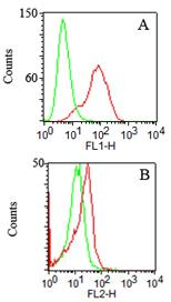 TLR2 Antibody - Flow Cytometry: TLR2 Antibody (67N8F8) - A. Surface staining of transfected TLR2 HEK293 cells (red) and mock transfected cells (green) using TLR2 antibody at 1 ug/10^6 cells. FITC-conjugated anti-mouse IgG secondary was used for this test.B. Surface staining of PPI-negative PBMC (monocyte-gated) using TLR2 antibody (red) and isotype control antibody (green) at 1 ug/10^6 cells. PE-conjugated anti-mouse IgG secondary was used for this test.  This image was taken for the unconjugated form of this product. Other forms have not been tested.