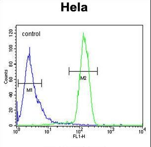 TM173 Antibody flow cytometry of HeLa cells (right histogram) compared to a negative control cell (left histogram). FITC-conjugated goat-anti-rabbit secondary antibodies were used for the analysis.